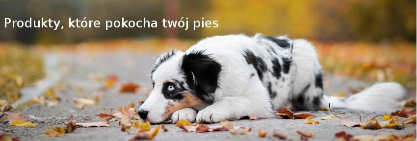 karmy i akcesoria dla psa